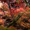 Photos: 乱舞する紅葉