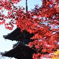 Photos: 塔を彩る紅葉