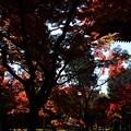 Photos: 本堂南東