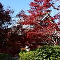 西雲院脇の紅葉