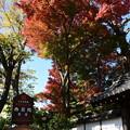 西翁院の紅葉