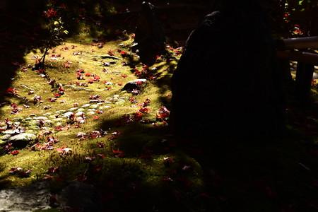秋の日射しと散り紅葉