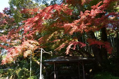栄摂院庭園の紅葉