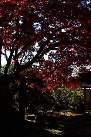 栄摂院庭園