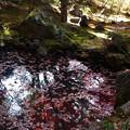 Photos: 池に映る紅葉