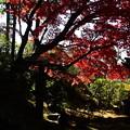 Photos: 栄摂院庭園の紅葉