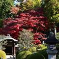 Photos: 栄摂院の紅葉