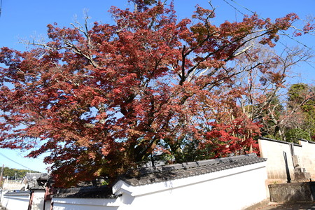 栄摂院の紅葉