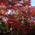 吉田山荘の色づき