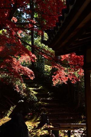 栄摂院庭園の色づき