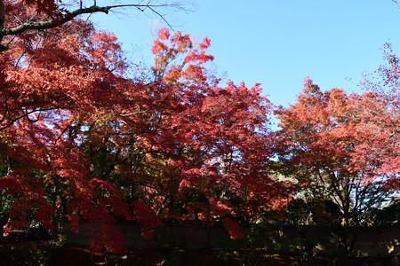 吉田山荘の紅葉