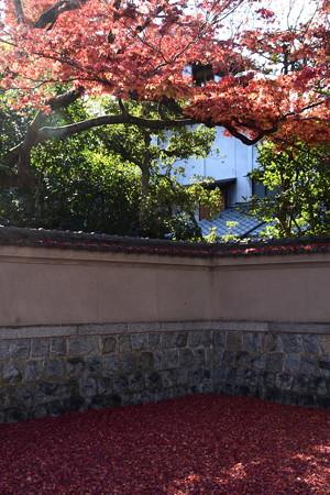 旧三井家下鴨別邸の紅葉