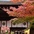 梨木神社の色づき