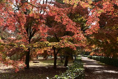 京都御苑の彩り