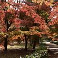 Photos: 京都御苑の彩り