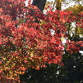 Photos: 燦めく紅葉
