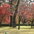 紅葉の京都御苑