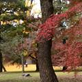 Photos: 凝華洞跡脇の紅葉