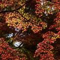 Photos: 渦巻く紅葉