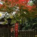 Photos: 白雲神社の紅葉