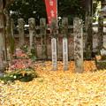Photos: 黄色に染まる白雲神社