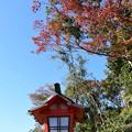 Photos: 参道の紅葉
