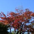 Photos: 船岡山の紅葉
