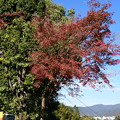 建勲神社の紅葉
