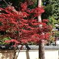 Photos: 相国寺の紅葉