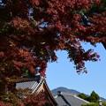 Photos: 紅葉の下の比叡山