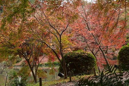 池脇の紅葉