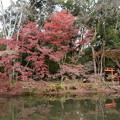 半木神社脇の彩り