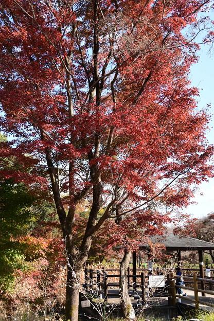 蓮池脇の紅葉