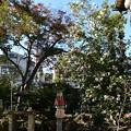 Photos: 山茶花咲く神光院