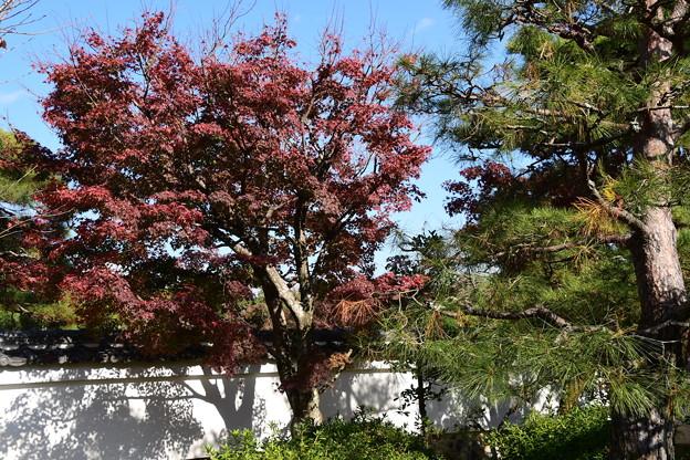 一様院の紅葉