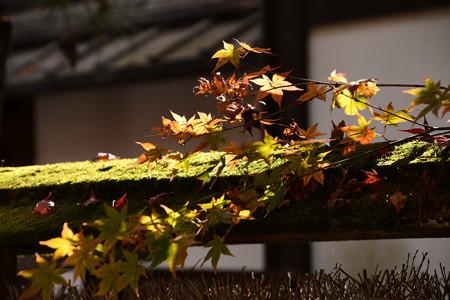 下鴨神社の紅葉景色