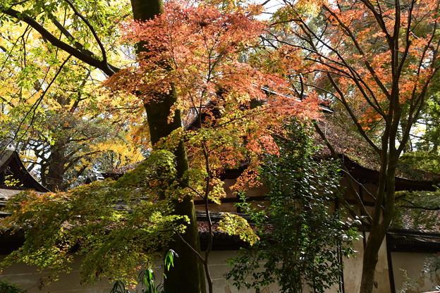 河合神社の紅葉