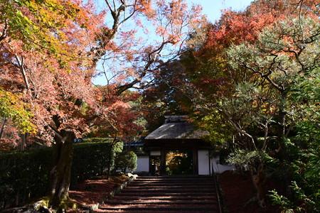 山門を包む紅葉