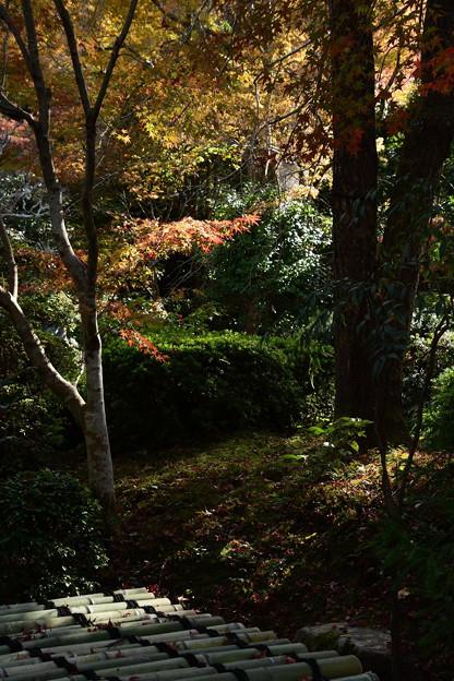 晩秋の光に