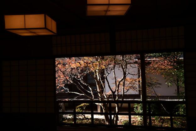 部屋越しの紅葉