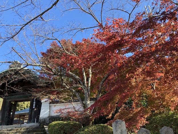 北山別院の紅葉