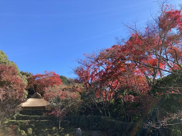 芭蕉庵を包む紅葉