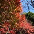 Photos: 聖水幼稚園脇の色付き
