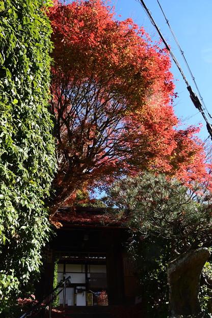 山門を蔽う紅葉