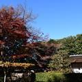 Photos: 残月軒脇の紅葉