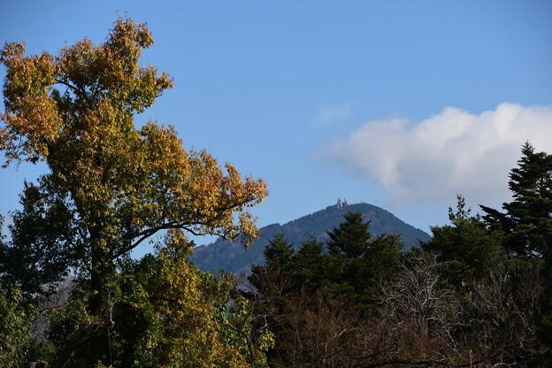 彩りの丘から見る比叡山