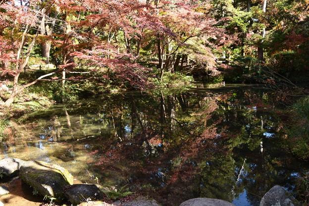 紅葉を映す池