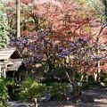 水車小屋を包む紅葉