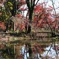 晩秋の池面