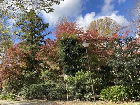 下鴨別邸の紅葉